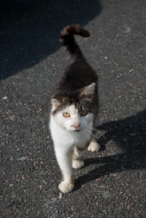 Upphittad katt i Lindome