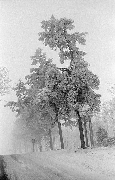 Li in the winter